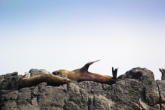 Seals sunbathing on Montague Island
