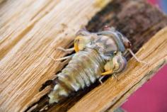 Cicada Birth - 5