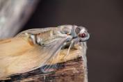 Cicada Birth - 8