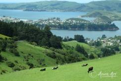 New Zealand - Dec 2011-9