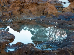 Reflections-at-Narrawallee-Beach