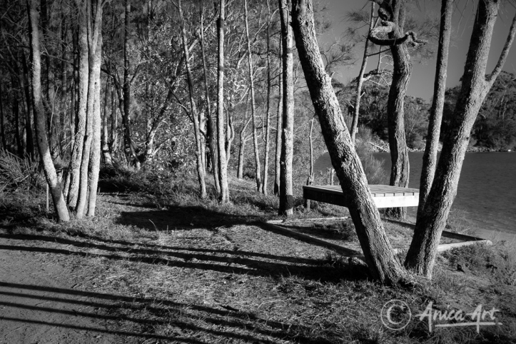 Sunlit trees at Narrawallee Inlet - monochrome