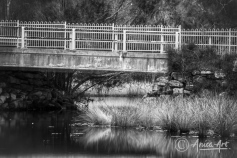 Close up of bridge over Blackwater Creek in Mollymook