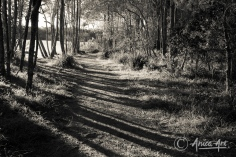 Path through Narrawallee Reserve