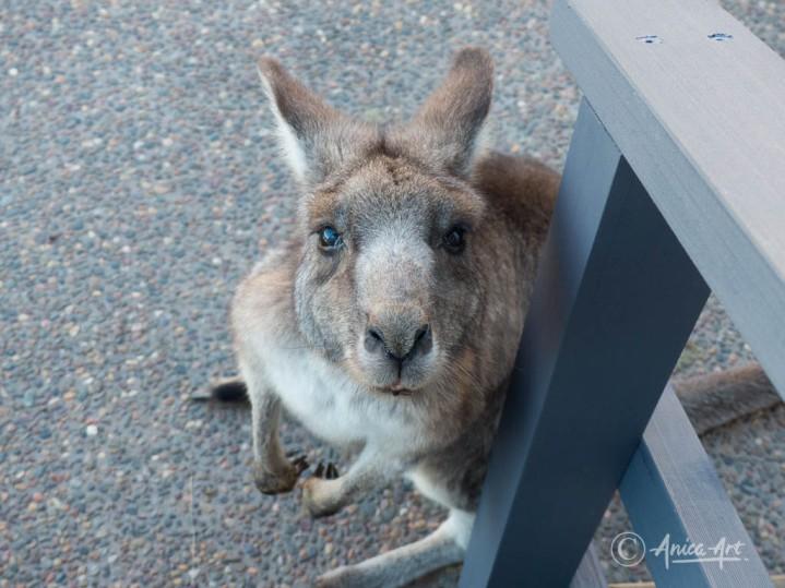 Kangaroos into the bin-4