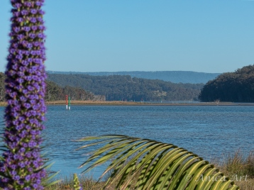 Burrill Lake -12