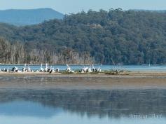 Burrill Lake -15