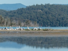 Burrill Lake -15