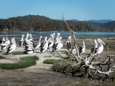 Burrill Lake -16