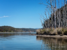 Burrill Lake -19