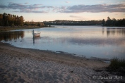 Burrill Lake -4