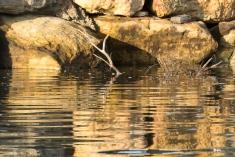 Peaceful dawn at Lake Conjola-3