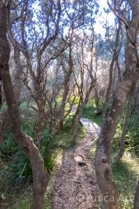 Warden Head bush track