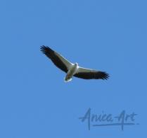 Eagle-0927