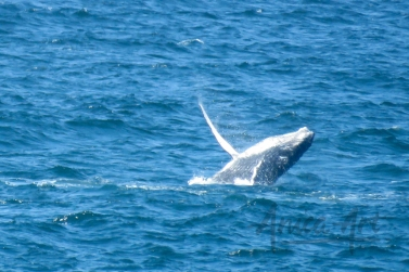 Narooma wildlife (9 of 10)