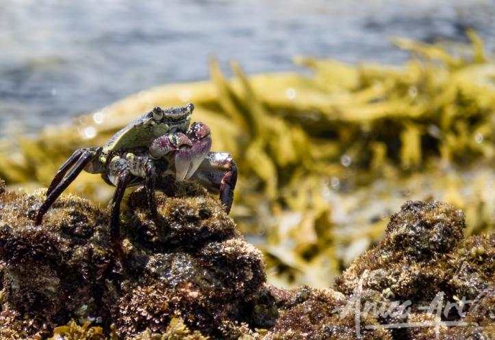 crab_8080