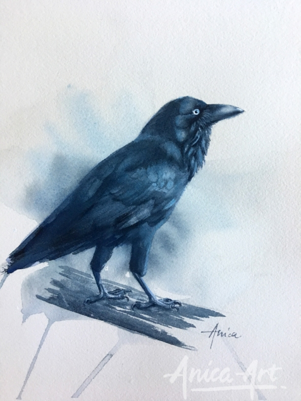 ausrralian-raven
