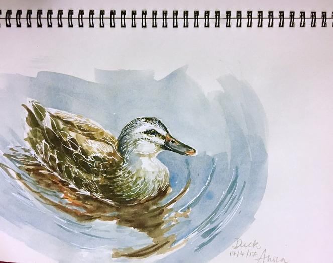 Duck_sketch