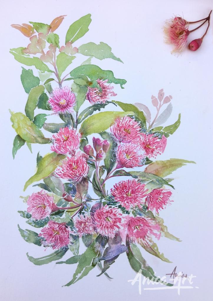 Gum blossoms on white