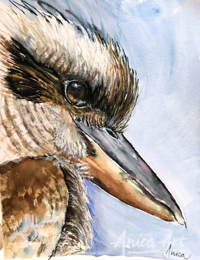 Kookaburra_portrait_