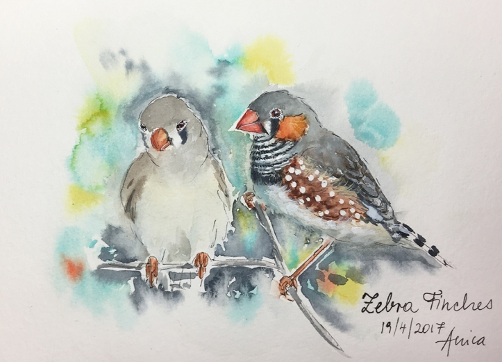 Zebra Finch couplejpg