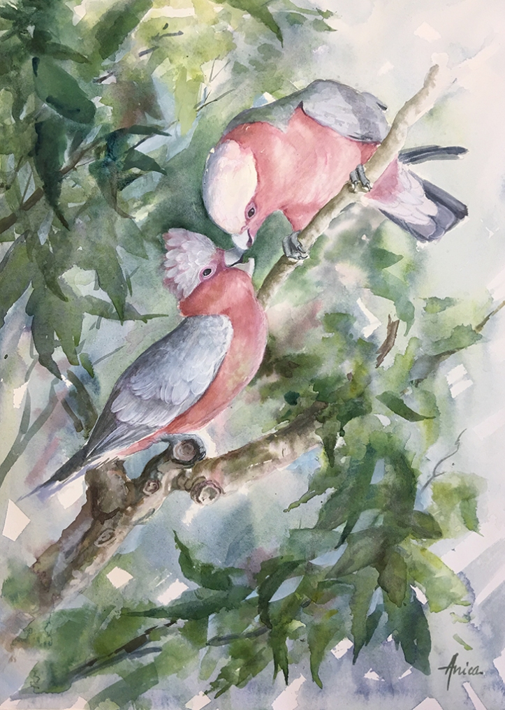 Mother and baby galahs feeding in tree