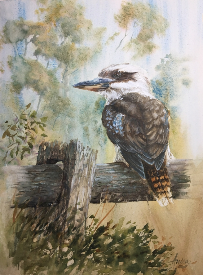 Kookaburra Watercolour painting