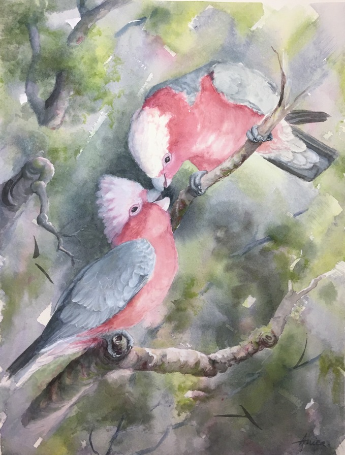 mother and baby galahs painting