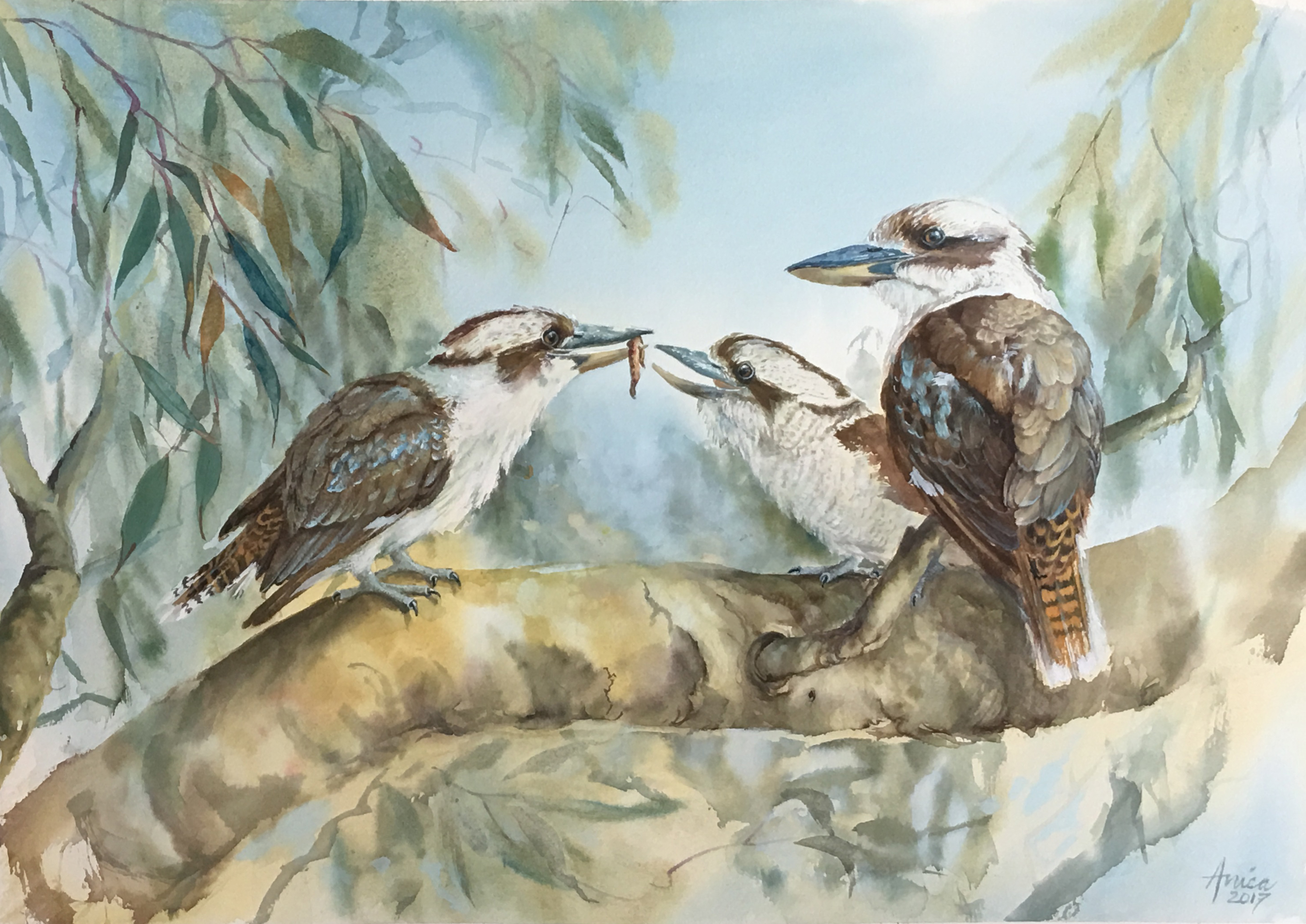 Family of Kookaburras