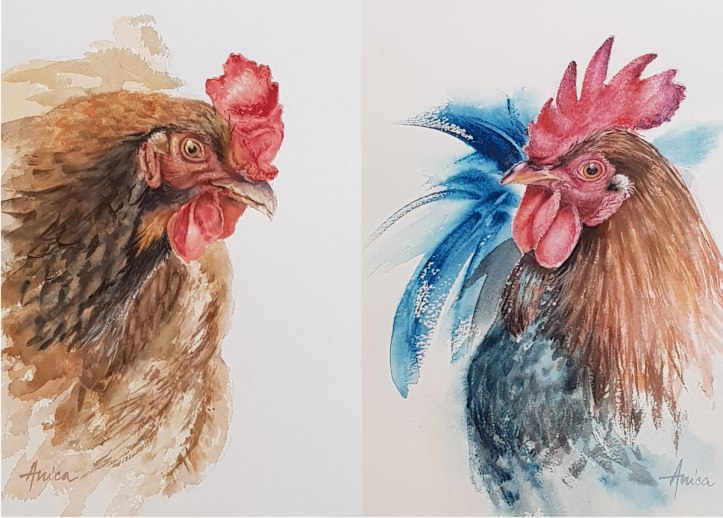 Chook-pair