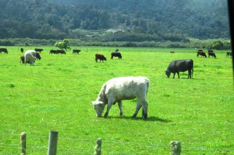New Zealand 1600 (5)