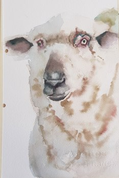 Sheep---first-practice