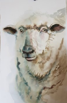 Sheep-second practice