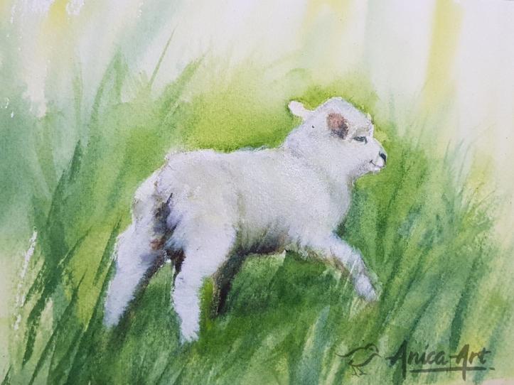 Baby lambs_New Zealand