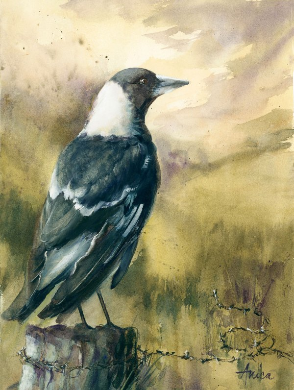 Original watercolor painting of Australian Magpie sitting on fence post