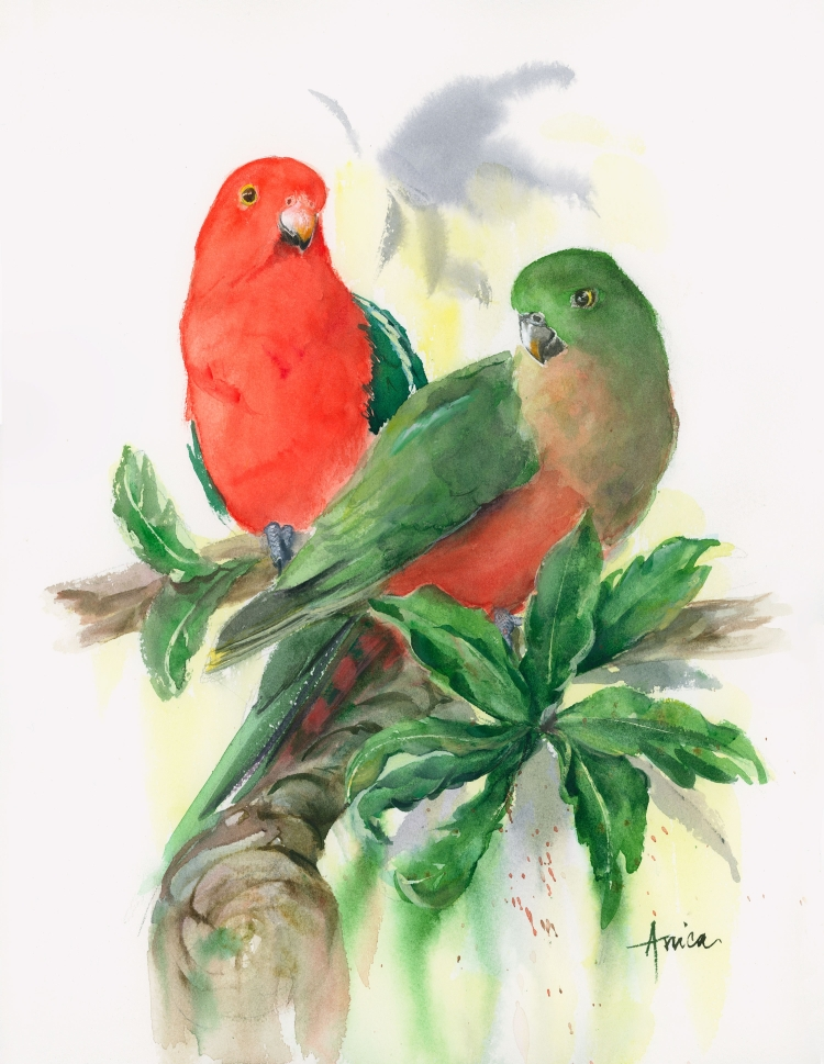 Australian-king-parrots-male-and-female