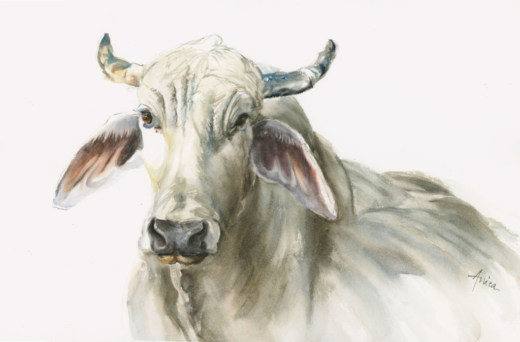 watercolor painting of Brahman bull